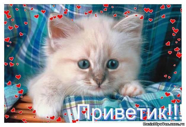 Открытки привет с котами